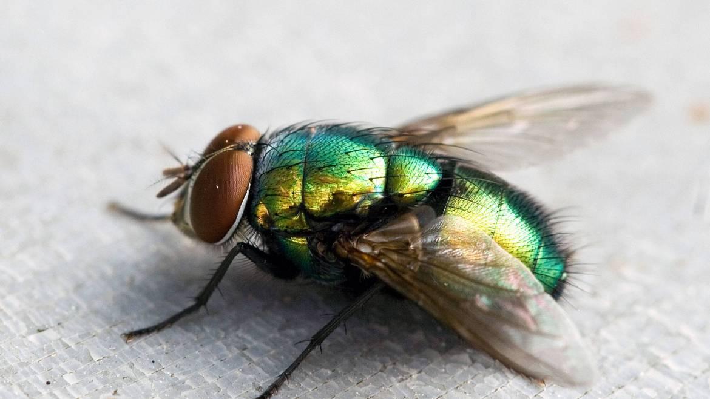 Пръскане против мухи