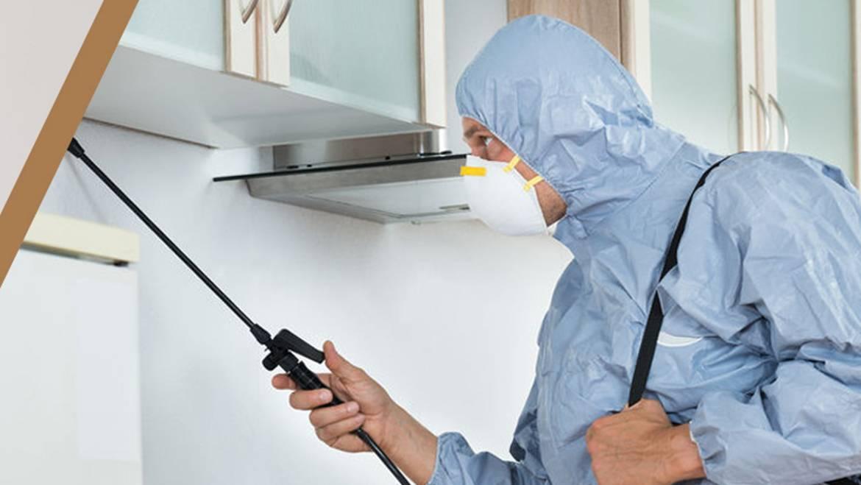Контрол на вредителите в дома и офиса